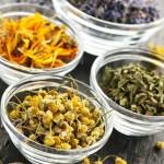 Как вылечить кашель с помощью лекарственных трав ?